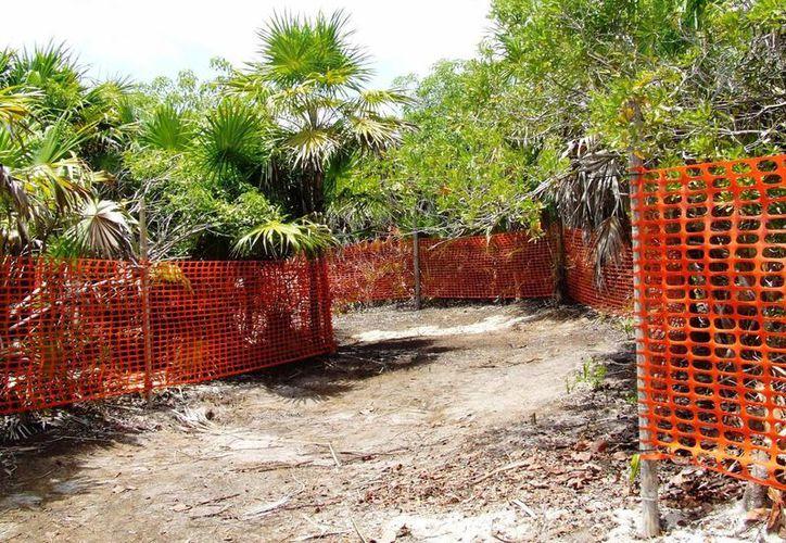 Ciudadanos se dicen preocupados por la devastación de mangle en Punta Piedra.  (Rossy López/SIPSE)