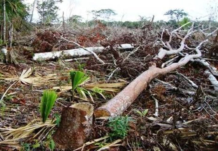 Profepa clausuró un predio por la remoción forestal sin contar con la autorización. (Contexto/Internet)