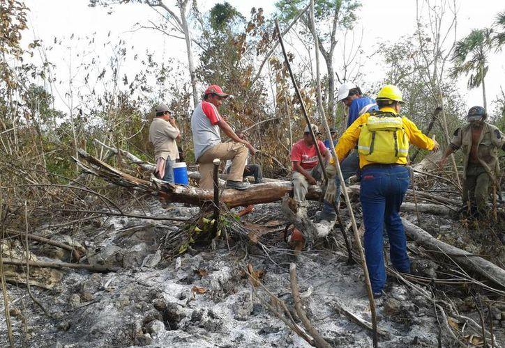 El incendio forestal del Pueblo Chiclero, al Norte del ejido Chacchoben, fue reportado como extinguido. (Omar Capistrán/SIPSE)