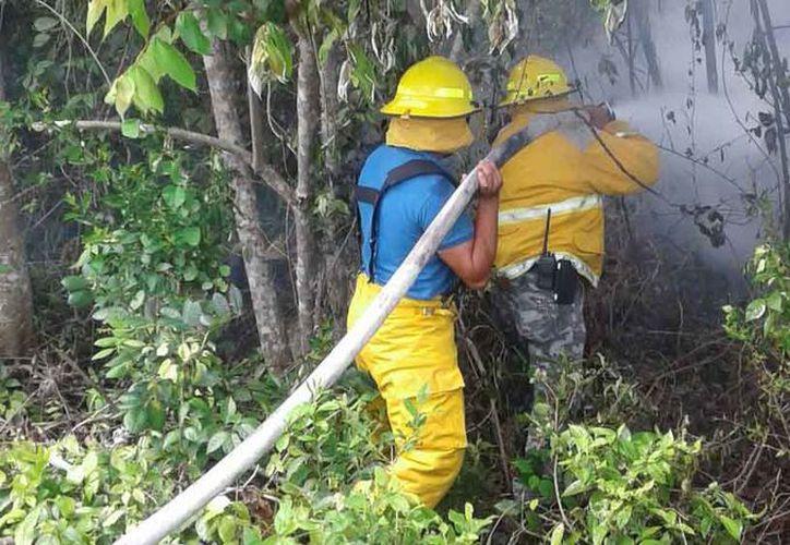 Los incendios ponen en jaque a las autoridades de los tres niveles de gobierno. (Raúl Balam/SIPSE)