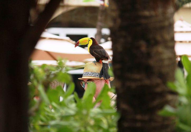 Las personas ocupan a los animales para fotografiarlos con los turistas. (Octavio Martínez/SIPSE)