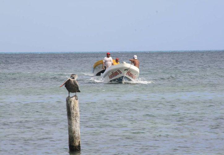 La cooperativa cuenta con 32 embarcaciones para dar el servicio de cruce a la isla. (Luis Soto/SIPSE)