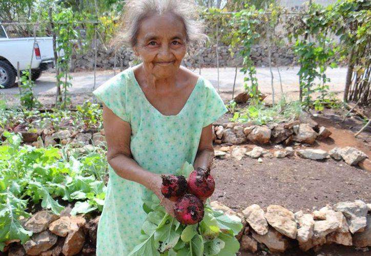 Los 8 mil 477 huertos de traspatio instalados en 48 municipios del estado han cambiado la vida de miles de familias yucatecas de escasos recursos. (José Acosta/SIPSE)