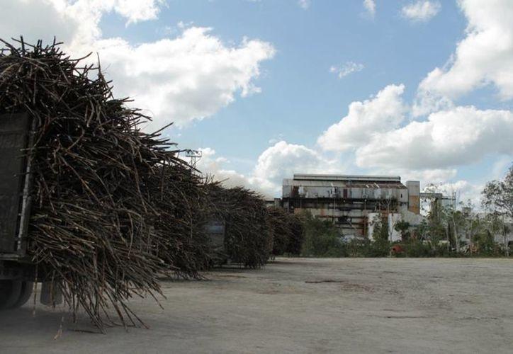 La producción de la caña de azúcar está por debajo en comparación de los años anteriores. (Edgardo Rodríguez/SIPSE)
