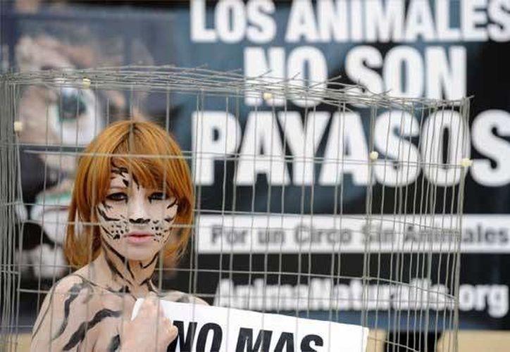 Los participantes manifestarán su repudio al maltrato animal con pancartas y carteles. (Foto de Contexto/adopta.mx)