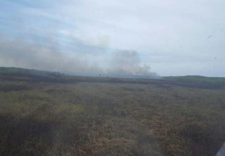 Aunque ahora se sabe que los incendios de Celestún y Dzilam no fueron intencionales, inspectores de la Profepa interpondrán denuncias a la PGR por delitos ambientales. (SIPSE)