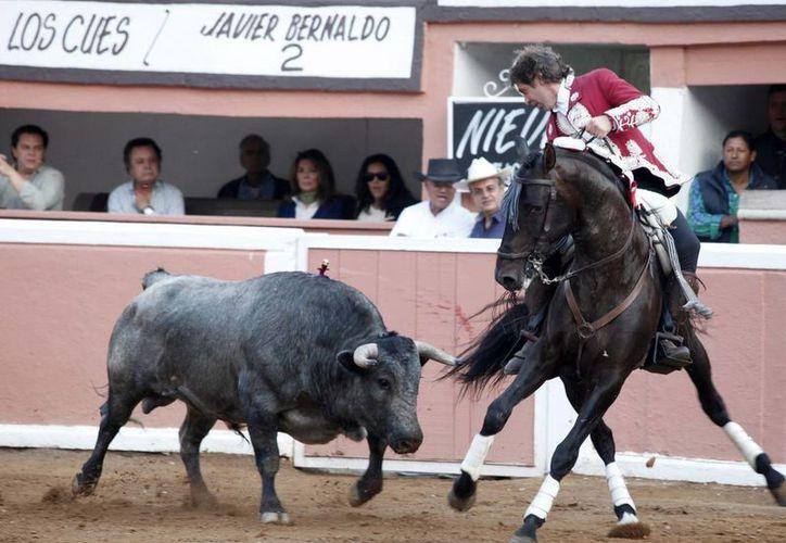 Los toros de lidia son los bureles usados en las corridas. (Archivo Notimex)