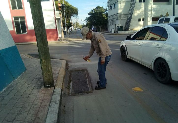 Las brigadas iniciaron con la colación de trampas y bloqueos para eliminar criaderos de moscos. (José Chi/SIPSE)