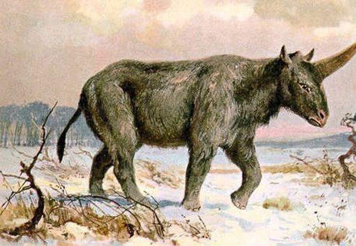 El unicornio de Siberia tenía un cuerno largo y grueso. (Twitter)