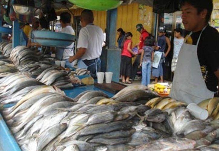 Afirman vendedores que la especie es de las más solicitadas para su consumo. (Enrique Mena/SIPSE)