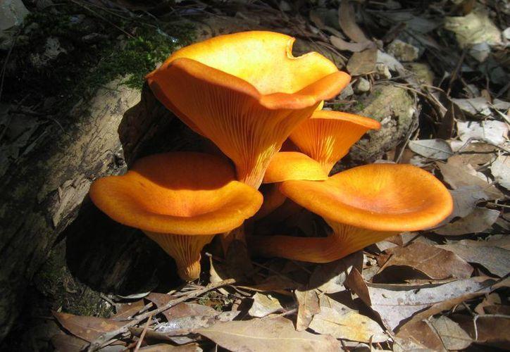 Una de las defunciones, por consumir sopa de hongos venenosos. (esacademic.com)