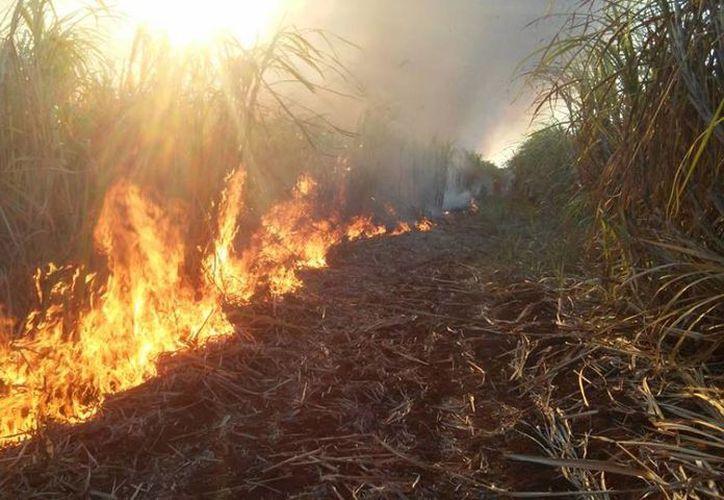 Personas que se dedican a la cría de ganado en el sur de Q. Roo enfrentan pérdidas materiales por incendios forestales. (Carlos Castillo/SIPSE)