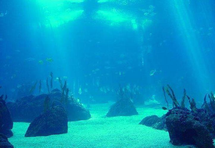 Del 6 al 14 de junio se realizará el Festival de los Océanos del Caribe Mexicano. (Contexto/Internet)