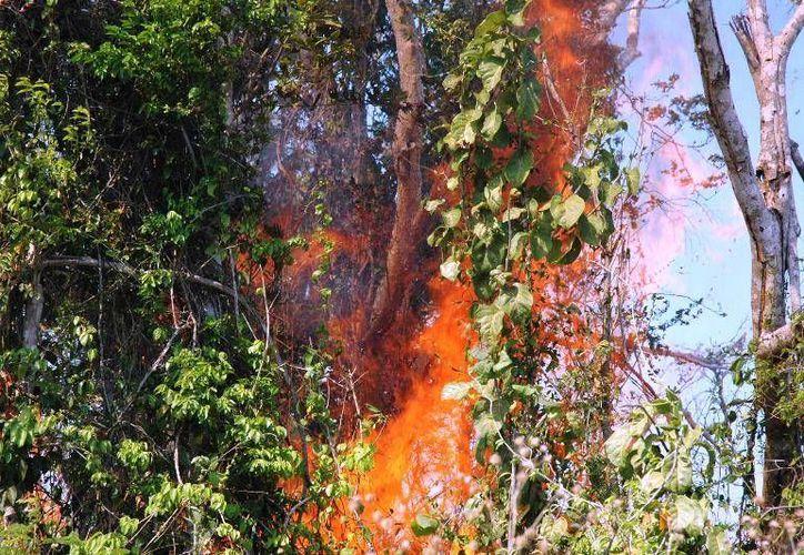 Autoridades del nivel central han prohibido los incendios cerca de las manchas urbanas. (Edgardo Rodríguez/SIPSE)