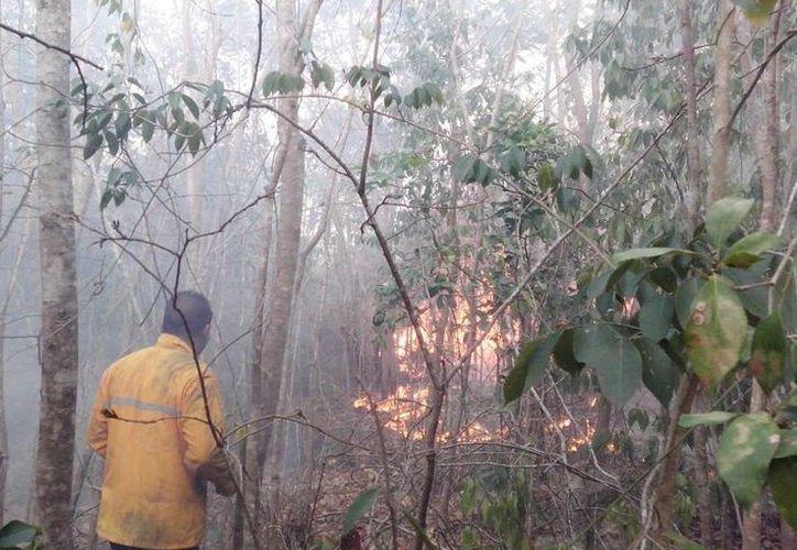 En abril y mayo se registró el mayor número de incendios forestales. (Israel Leal/SIPSE)