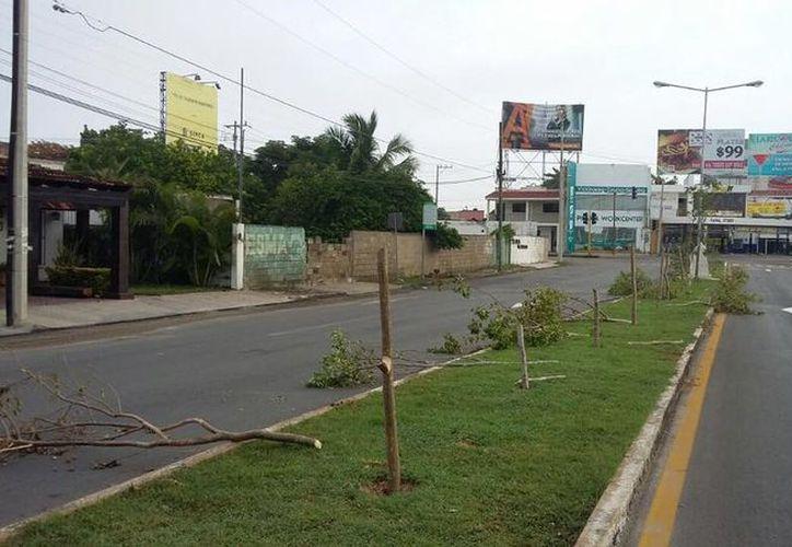 En redes sociales, los meridanos expresaron su indignación por lo que consideraron un arboricidio (Facebook: Mauricio Vila)