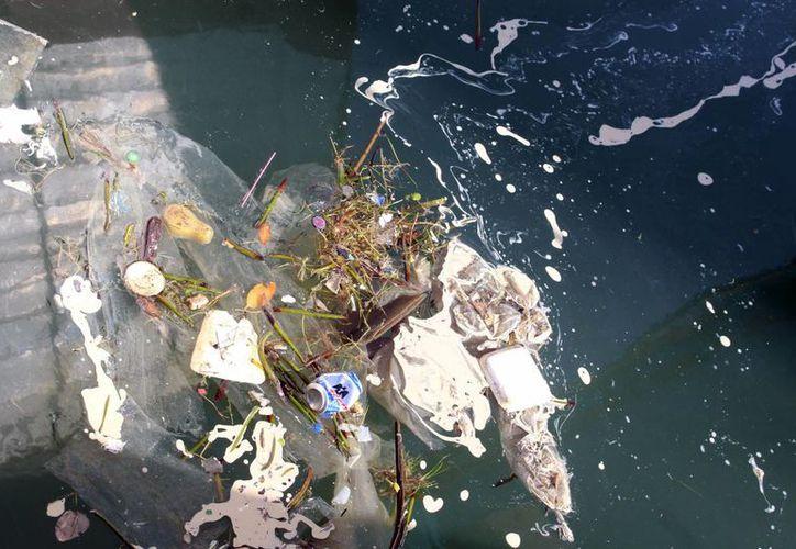 En las aguas que rodean el Puerto de abrigo se puede ver la basura y los desperdicios, que forman un foco de infección. (Milenio Novedades)