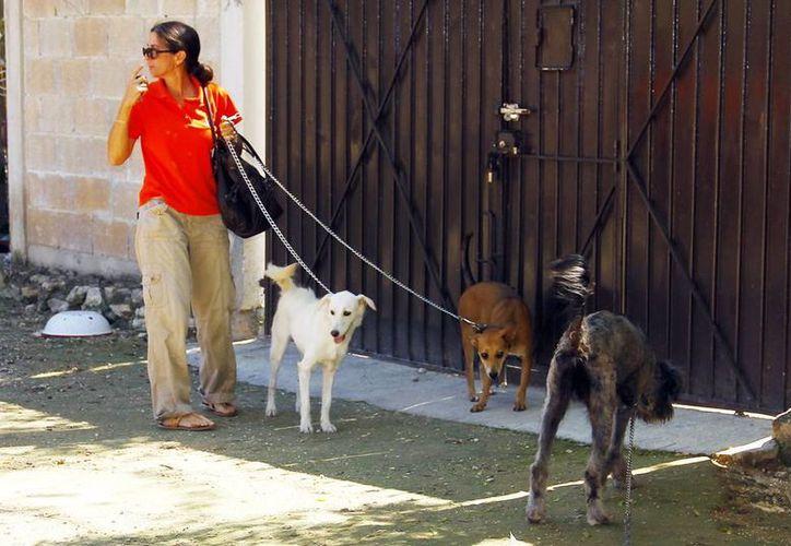 Se calcula que en Yucatán hay un perro por cada cinco habitantes. (Milenio Novedades)