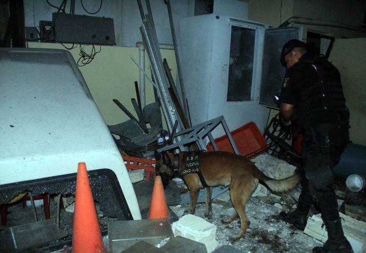Perros de la unidad canina de la SPP buscan entre los escombros. (José Acosta/SIPSE)