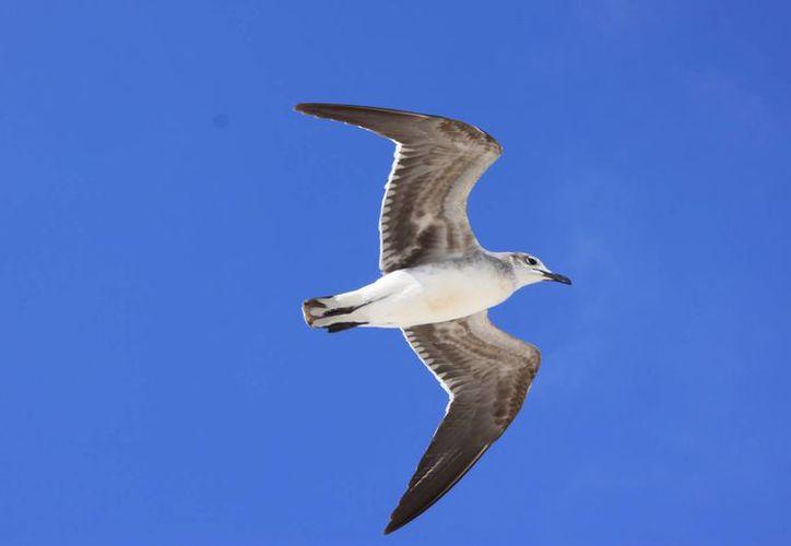 En el Estado el aviturismo es una de las actividades más buscadas por los visitantes. (Luis Soto/SIPSE)