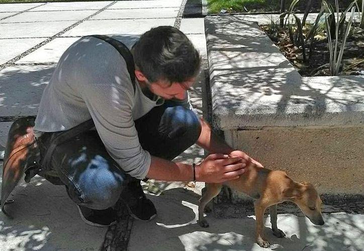 Alrededor de 11 cachorros son promovidos en adopción en la Universidad Anáhuac Cancún. (Jesús Tijerina/SIPSE)