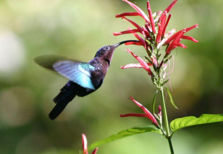 Los interesados aprenderán sobre el manejo de la cámara reflex, la luz, composición y creatividad para tomar fotografías de la naturaleza. (Foto: Contexto)