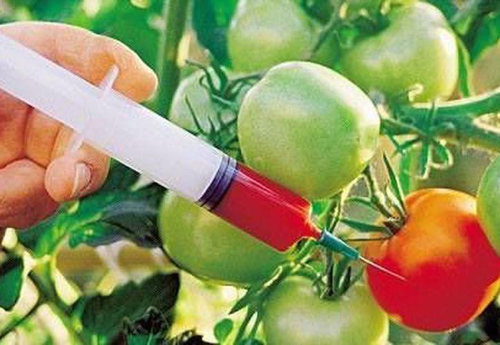 El consumo de alimentos transgénicos puede tener consecuencias en la salud. (Contexto/Internet)