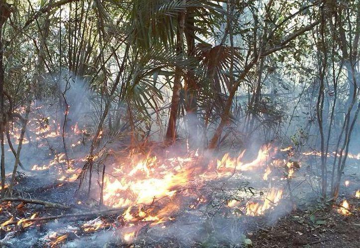 Año con años las autoridades enfrentan un gran reto contra el fuego que se genera en las zonas forestales de todo el país. (Joel Zamora/SIPSE)