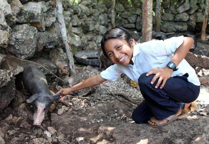 Adolescentes conocerán métodos de reproducción en cerdos. (Milenio Novedades)