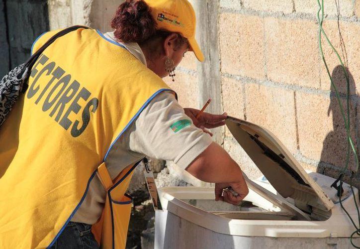 Personal de vectores aplican abate en tanques, cisternas y tinacos. (Rossy López/SIPSE)
