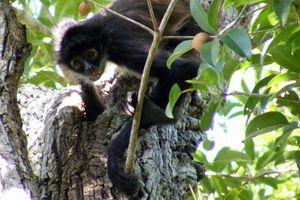 Punta Laguna, una reserva acorde con la naturaleza
