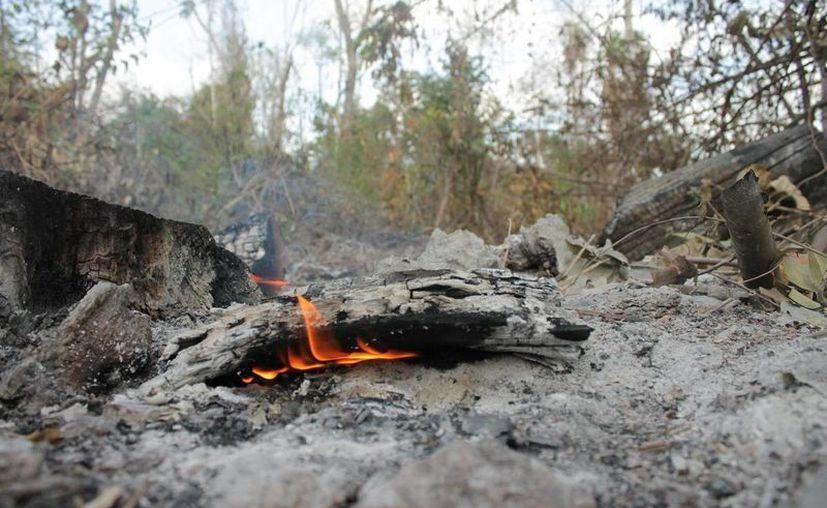 Autoridades de Protección Civil se preparan para la temporada de incendios forestales. (Ángel Castilla/SIPSE)