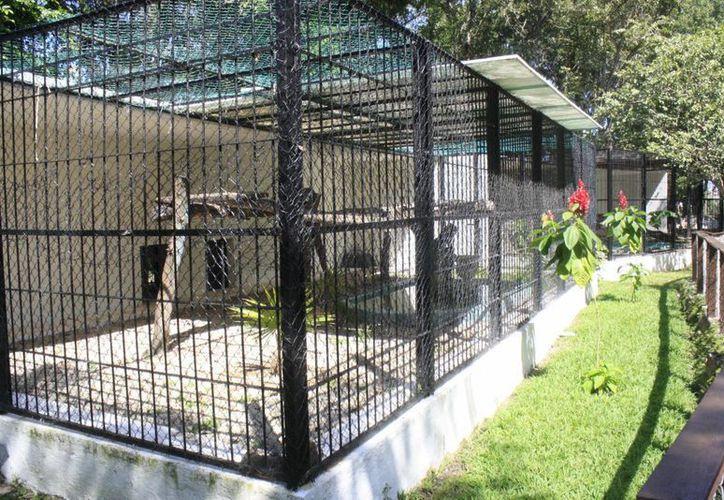 El alcalde de Othón P. Blanco ha ordenado una revisión del zoológico para obtener un informe sobre su situación actual. (Harold Alcocer/SIPSE)