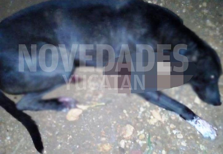 La Fiscalía General del Estado es la que tiene la tarea de investigar este delito de crueldad animal. (Novedades Yucatán)
