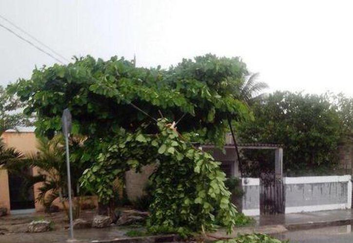 Efectos de la turbonada en Mérida. (@octavarium1983)