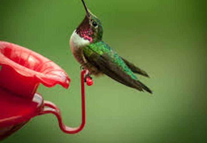 Cinco de 58 especies que revolotean en México se encuentran en alguna categoría de riesgo internacional. (Foto: Contexto)