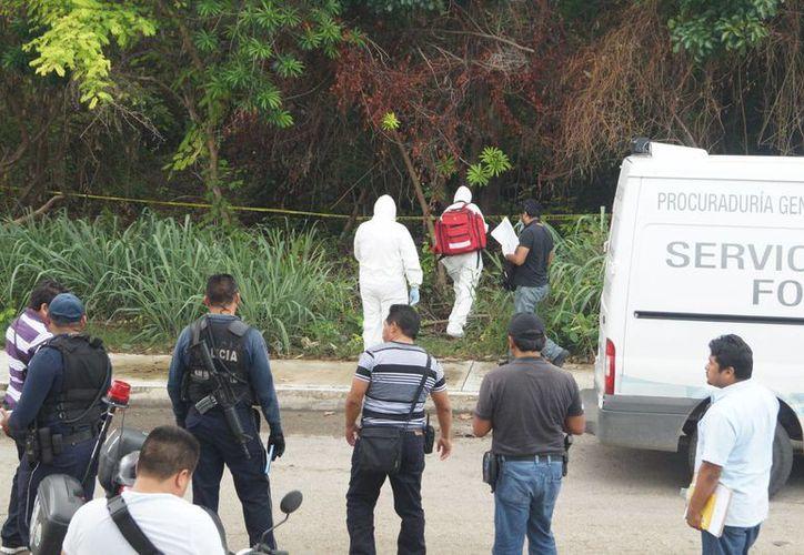 Elementos de la Policía Municipal y Ministerial ingresaron aproximadamente a unos 50 metros dentro de la maleza. (Redacción/SIPSE)