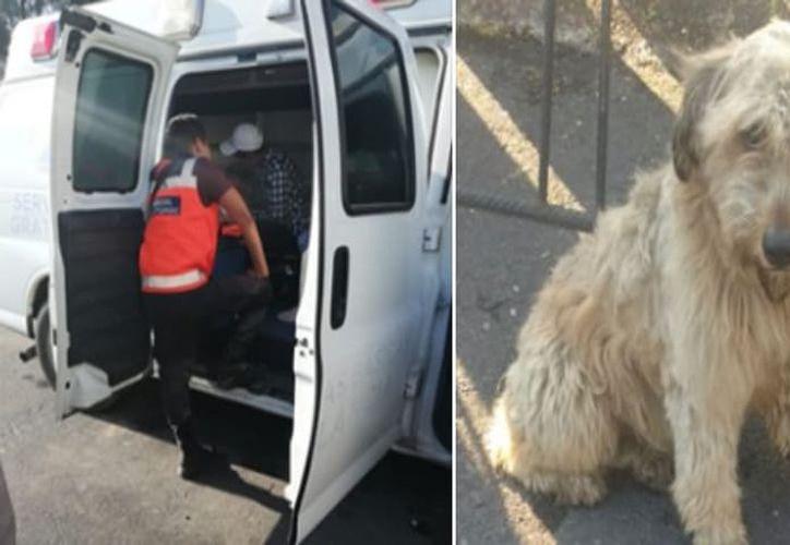 El niño fue llevado a un hospital, y el perro, a centro de atención canina. (Internet)