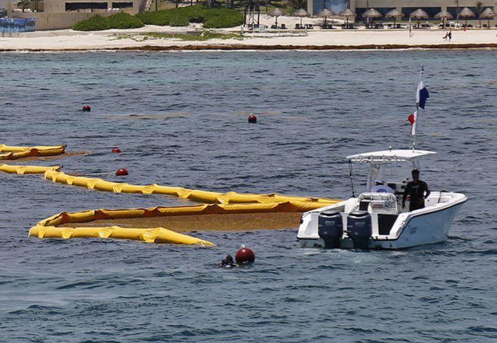 El plan incluye el remolque de las algas hacia una zona en donde las corrientes la alejen de las costas. (Paola Chiomante/SIPSE)