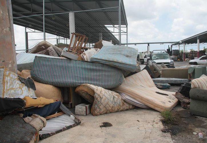 Los artículos son recolectados principalmente en lotes baldíos, en basureros clandestinos  y en la vía pública. (Julian Miranda/SIPSE)