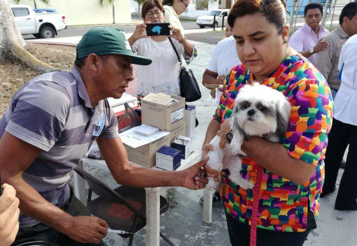 El propósito del Ayuntamiento capitalino es vacunas a 25 mil mascotas, en un año. (Foto: David de la Fuente)