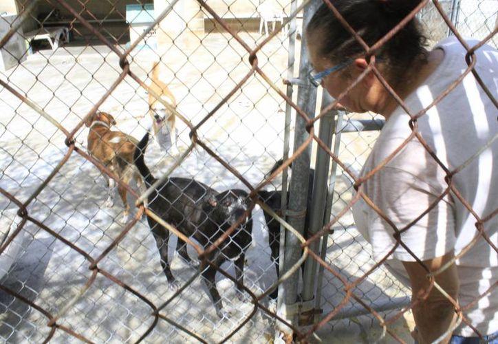 Para mantener a estos perros Rosalinda Figueroa busca apoyo en restaurantes, veterinarios y sociedad. (Sergio Orozco/SIPSE)