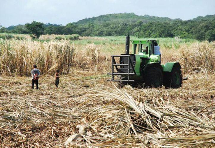 Al comenzar la cosecha de caña de azúcar se eleva el índice de migración a lo largo de la frontera. (Archivo/SIPSE)