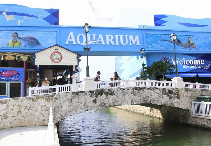 El Acuario Interactivo de Cancún tiene más de cinco años y fue a partir de 2014 cuando Delphinus comenzó a dirigirlo. (Luis Soto/SIPSE)