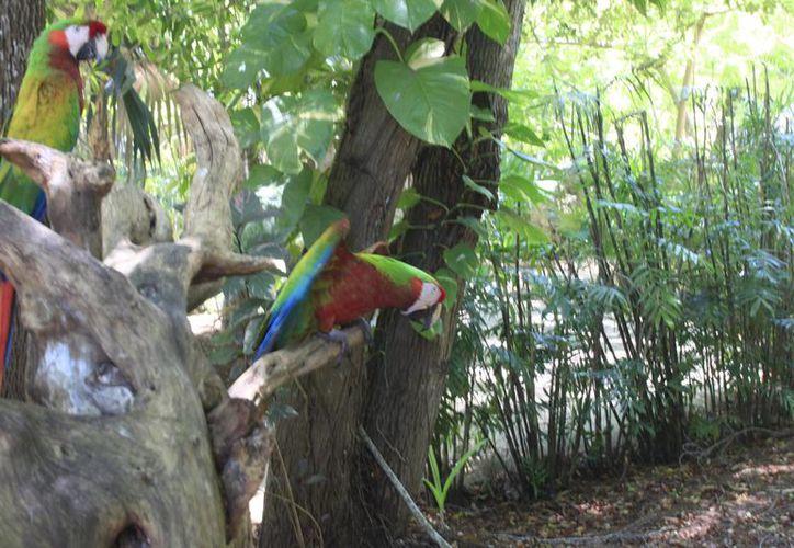 La administración del zoológico confirmó que se ha realizado la habilitación, reparación y creación de espacios para el avistamiento de las especies. (Harold Alcocer/SIPSE)