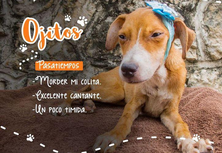 Marcela comenzó a rescatar mascotas cuando vio videos y fotos de animales maltratados. (Facebook: Patitas y Colitas)