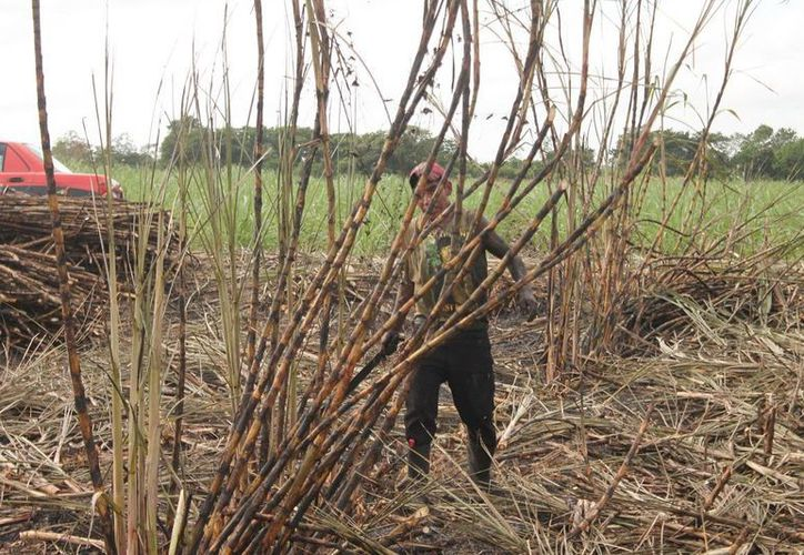 La producción de azúcar vive una de las etapas más bajas en los últimos 10 años. (Edgardo Rodríguez/SIPSE)
