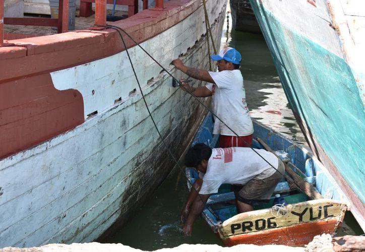 Pescadores se anticipan a contratiempos en altamar. (Gerardo Keb/Progreso)