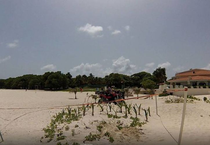 Desde el municipio se fomenta la reforestación de dunas costeras con plantas de la región.  (Redacción/SIPSE)