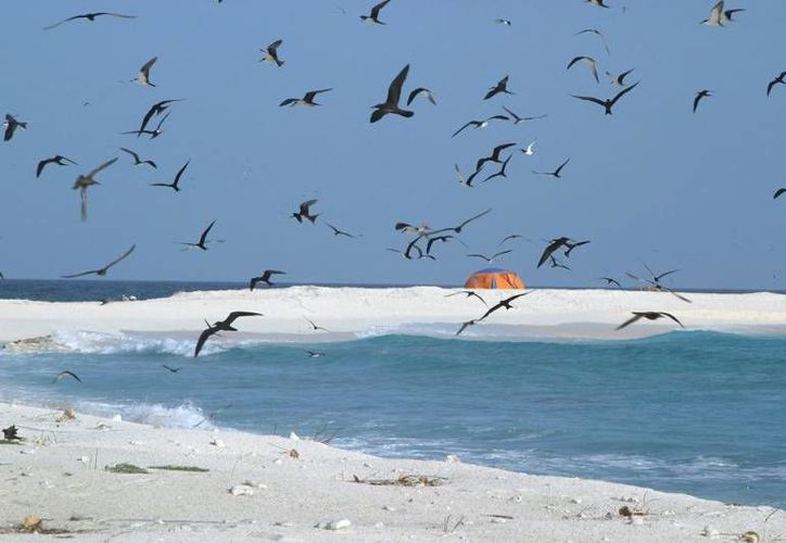 Isla Contoy es albergue de la región de aves migratorias. (Israel Leal/SIPSE)